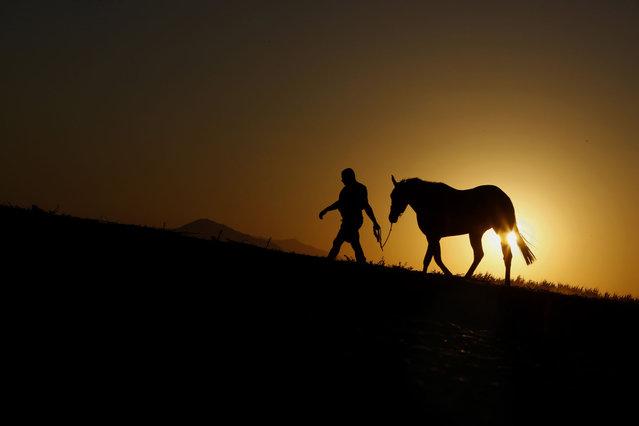 Farmer Iacovos Tofi, 35, with his horse walk during sunset at Meneou village near southern coastal city of Larnaca in the eastern Mediterranean island of Cyprus, Monday, August 17, 2020. (Photo by Petros Karadjias/AP Photo)