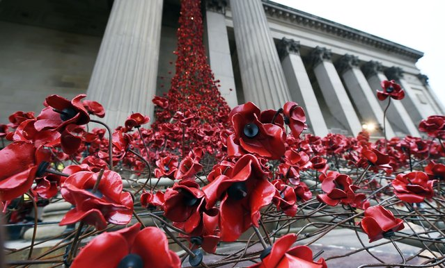 A picture shows the Weeping Window poppy installation by artist Paul Cummins and designer Tom Piper at St George's Hall in Liverpool, north west England, on November 6, 2015. Liverpool is hosting Cummins and Piper's Weeping Window installation in 2015 presented by  (Photo by Paul Ellis/AFP Photo)