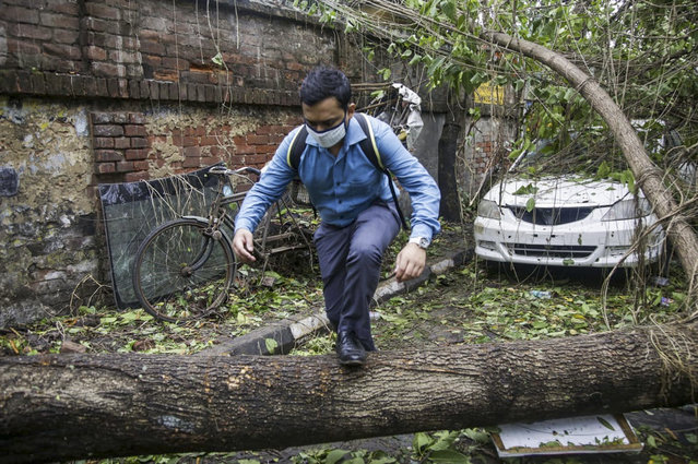 A man makes his way tpast a tree fallen in the middle of a road after Cyclone Amphan hit the region in Kolkata, India, Thursday, May 21, 2020. A powerful cyclone ripped through densely populated coastal India and Bangladesh, blowing off roofs and whipping up waves that swallowed embankments and bridges and left entire villages without access to fresh water, electricity and communications. (Photo by Bikas Das/AP Photo)