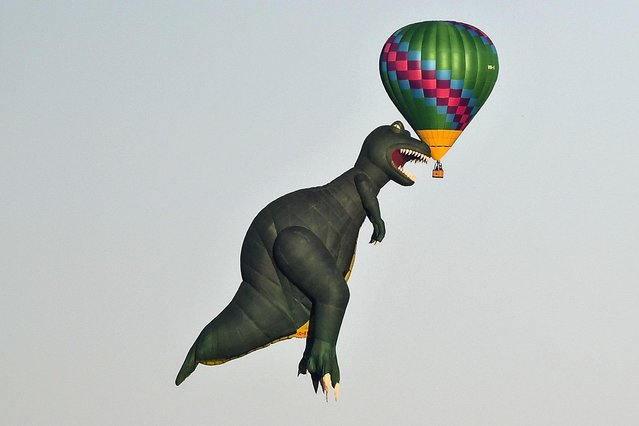 A hot air balloon in the shape of a tyrannosaurus rex is seen next to another hot air balloon at the Canberra International Balloon Festival in Canberra, Australia, 12 March 2020. The Canberra Balloon Festival is considered one of the biggest hot air balloon festivals in the world. (Photo by Lukas Coch/EPA/EFE)