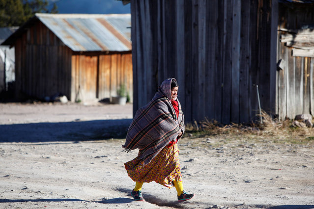 A woman from the Tarahumara ethnic group walks covered in a blanket as they prepare for winter in Caborachi village, in Guachochi, Mexico, December 17, 2016. (Photo by Jose Luis Gonzalez/Reuters)