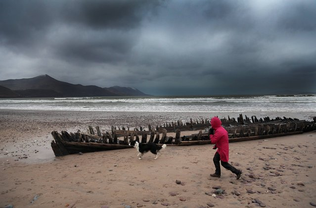 A walker braving the elements as the storm rises on Rossbeigh Strand, County Kerry, on December 26, 2013. (Photo by Valerie O'Sullivan)