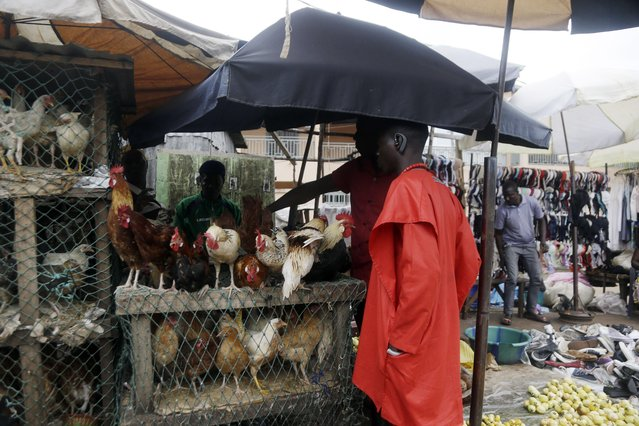 A man buys a chicken at Kaporo market in Conakry, Guinea Monday, September 13, 2021. (Photo by Sunday Alamba/AP Photo)