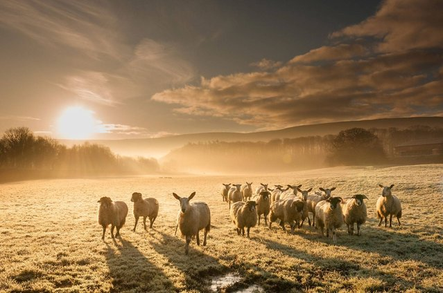 """""""Unexpected sun"""". (Photo by Luke Oyston/PA Wire)"""