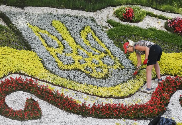 A communal worker tends a flowerbed, displaying the Ukrainian coat of arms, in central Kiev, Ukraine, July 1, 2015. (Photo by Gleb Garanich/Reuters)