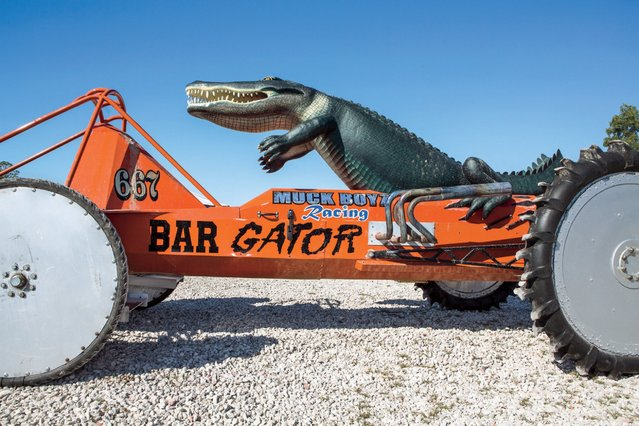 "John ""Allen"" Barfield drove the Bar Gator swamp buggy. The fabricated giant alligator, which appears to be attacking the driver, is mounted on the back of the buggy and is one of the most unusual designs at the Florida Sports Park. Barfield hailed from Clewiston and passed away on February 15, 2015. Allen, as he was called, was the co-owner of Everglades Machine Shop and the owner and crew leader of Muck Boyz racing crew. (Photo by Malcolm Lightner)"