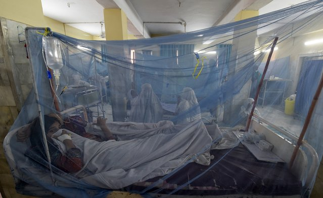 Pakistani patients suffering from dengue fever rest on a bed under netting at a hospital in Peshawar on September 12, 2019. Dengue fever is spread by mosquitoes that breed in stagnant water and causes flu-like symptoms accompanied by nausea and sometimes bleeding, but is rarely fatal. (Photo by Abdul Majeed/AFP Photo)