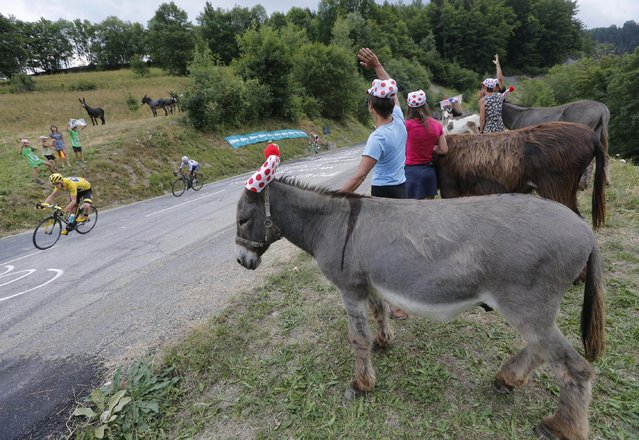 Italy's Vincenzo Nibali passes spectators with donkeys during the nineteenth stage of the Tour de France cycling race over 138 kilometers (85.7 miles) with start in Saint-Jean-de-Maurienne and finish in La Toussuire, France, Friday, July 24, 2015. (Photo by Christophe Ena/AP Photo)