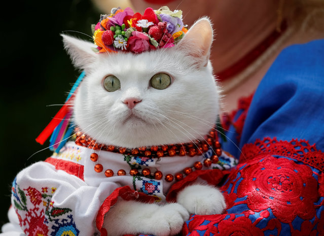 A woman dressed in a traditional Ukrainian embroidered shirt holds her cat as she take part in an embroidered shirt parade in central Kiev, Ukraine, May 27, 2017. (Photo by Gleb Garanich/Reuters)