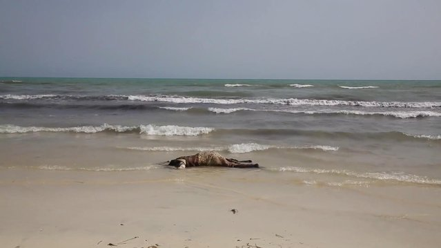 The lifeless body of a migrant lays on the beach near the western city of Zwara, Libya, Thursday June 2, 2016, as rescue workers begin to retrieve some of the more than 100 bodies pulled from the sea, after a smuggling boat carrying mainly African migrants sank into the Mediterranean.  Libya's navy spokesman Col. Ayoub Gassim says, Friday June 3, that the bodies of more than 100 migrants have been retrieved, but the death toll is likely to be higher. (Photo by APTV via AP Photo)