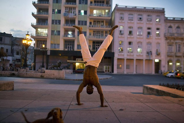 Capoeira teacher Eiwer Carbonell, 21, warms up before a lesson near his dog Champion, or Campeon in Spanish, playing around in downtown Havana February 4, 2015. (Photo by Alexandre Meneghini/Reuters)