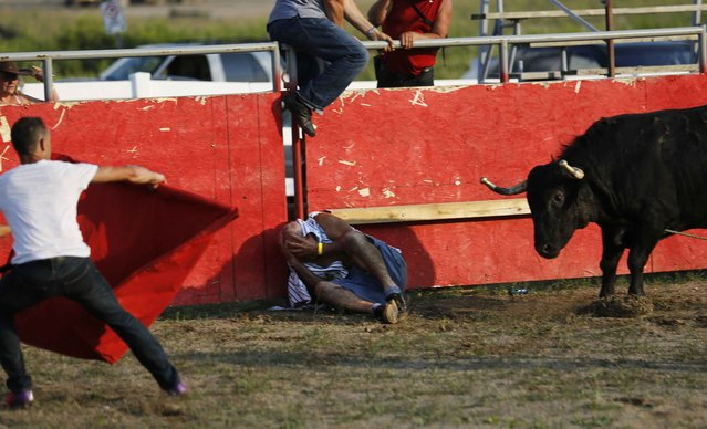 """A matador tries to distract an attacking bull after Bolino Silveira (C), who emigrated from the Azores to Mississauga, Ontario, tries to protect his head after falling at an Azorean """"tourada a corda"""" (bullfight by rope) in Brampton, Ontario August 15, 2015. (Photo by Chris Helgren/Reuters)"""