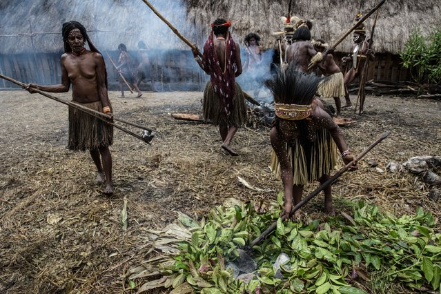 People from the Dani tribe take hot stones as they prepare to cook in a traditional way at Obia Village on August 9, 2014 in Wamena, Papua, Indonesia. (Photo by Agung Parameswara/Getty Images)
