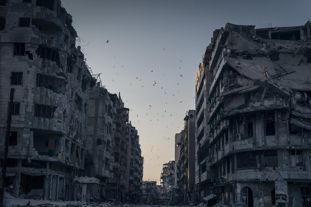 """Destroyed Homs"". Birds fly over the destroyed houses in Khalidiya district in Homs, Syria. In the vast stillness of the destroyed city center of Homs, there are large areas where nothing moves. Then, suddenly, wind blows a ripped awning, or birds fly overhead. Photo location: Homs, Syria. (Photo and caption by Sergey Ponomarev/National Geographic Photo Contest)"