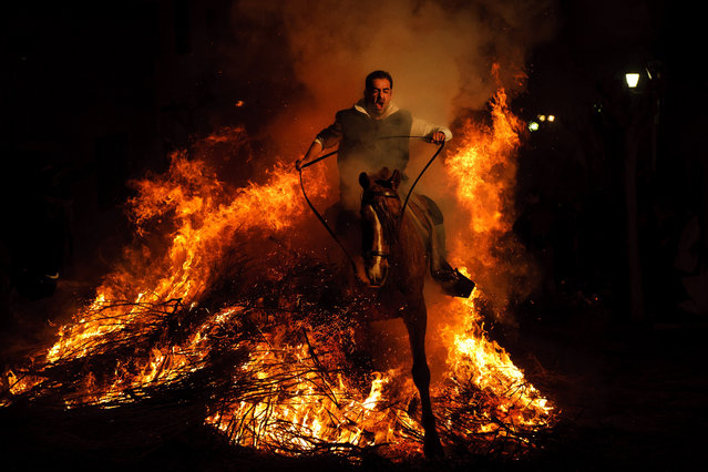 "A man rides a horse through a bonfire in San Bartolome de Pinares, Spain, Monday, January 16, 2012, in honor of Saint Anthony, the patron saint of animals. On the eve of Saint Anthony's Day, hundreds ride their horses trough the narrow cobblestone streets of the small village of San Bartolome during the ""Luminarias"", a tradition that dates back 500 years and is meant to purify the animals with the smoke of the bonfires and protect them for the year to come. (Photo by Daniel Ochoa de Olza/AP Photo)"
