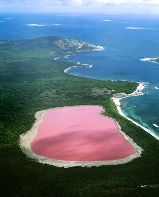 The pink Lake Hiller lake in Western Australia – Scientists have proven the strange pink color is due to the presence of algae which is usually the cause of strange coloration. (Photo by Jean Paul Ferrero/Ardea/Caters News)