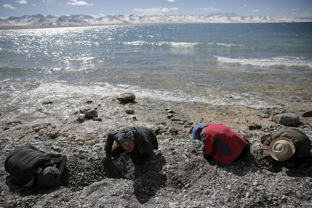 Tibetan people search for special pebbles at the shore of Namtso lake in the Tibet Autonomous Region, China November 18, 2015. (Photo by Damir Sagolj/Reuters)