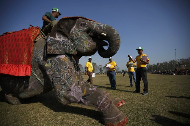 """An adorned elephant displays its skills to the judges during the elephant beauty contest organised at the Elephant Festival event at Sauraha in Chitwan, about 170 km (106 miles) south of Kathmandu December 29, 2014. Elephants and """"mahouts"""", or elephant riders, from Chitwan are participating in the Elephant festival, which involves elephant races, elephants playing an exhibition soccer match and taking part in various other sporting activities. The event runs from December 26 to December 30. (Photo by Navesh Chitrakar/Reuters)"""