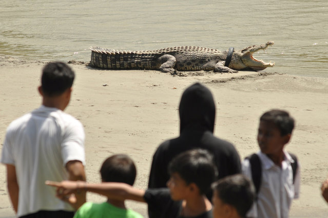 People watch a crocodile with a used motorcycle tyre around its neck on a river in Palu, Central Sulawesi province, Indonesia September 20, 2016 in this picture taken by Antara Foto. Residents suspect the tyre was garbage thrown into the river before it became trapped around the crocodile's neck, reported Antara. (Photo by Mohamad Hamzah/Reuters/Antara Foto)