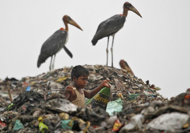 A scavenger, surrounded by a flock of Greater Adjutant birds, collects plastic for recycling at a dump site on World Environment Day in the northeastern Indian city of Guwahati June 5, 2013. (Photo by Utpal Baruah/Reuters)