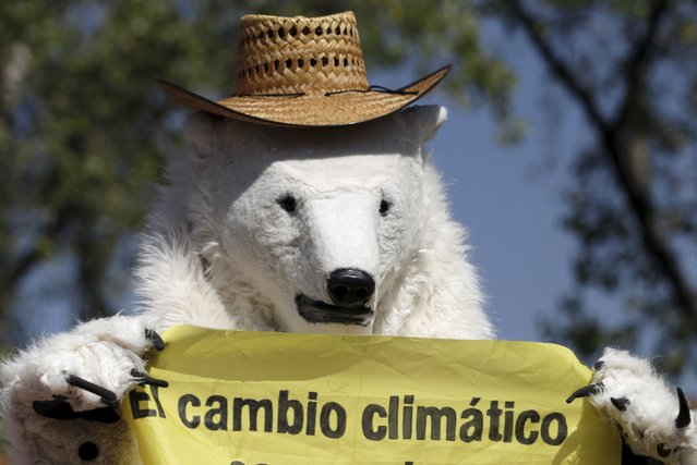 """A Greenpeace activist dressed as a bear holds up a banner during a rally held the day before the start of the Paris Climate Change Conference (COP21), in Mexico City, Mexico November 29, 2015. The banner reads, """"Climate Change"""". (Photo by Daniel Becerril/Reuters)"""