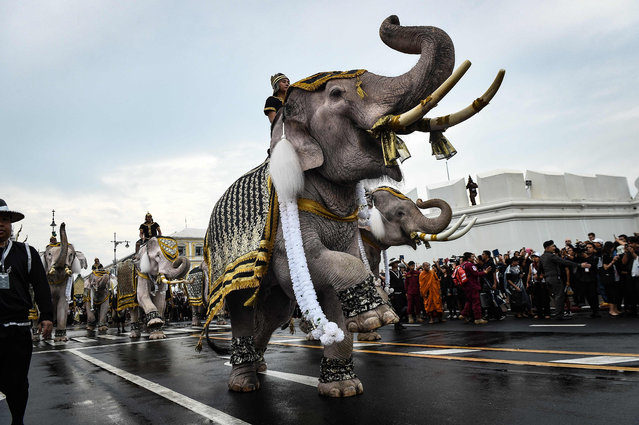 Elephants are paraded in front of the Grand Palace to pay respects to the late Thai King Bhumibol Adulyadej in Bangkok on October 8, 2016. Thailand' s King Bhumibol Adulyadej died at the age of 88 on October 13 after years of ill health, ending a seven- decade reign and leaving the politically divided nation without its key pillar of unity. (Photo by Lillian Suwanrumpha/AFP Photo)