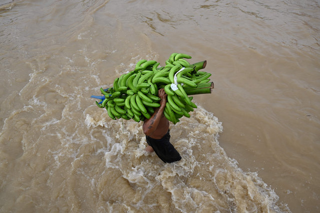 A wades carrying bananas after the Ulua river overflowed due to the heavy rains caused by Hurricane Eta, now degraded to a tropical storm, in the city of El Progreso, department of Yoro, 260 kms north of Tegucigalpa, on November 5, 2020. (Photo by Orlando Sierra/AFP Photo)