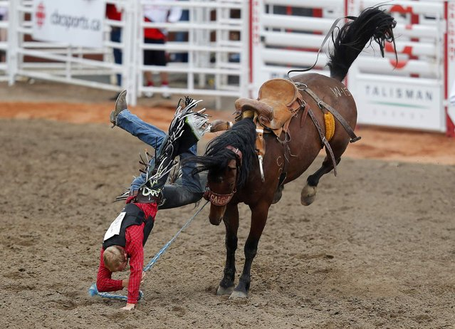 Tate Schwagler of Mandan, North Dakota gets bucked off the horse Wet Soot in the novice bareback event during the 101st Calgary Stampede rodeo in Calgary, Alberta, July 5, 2013. (Photo by Todd Korol/Reuters)