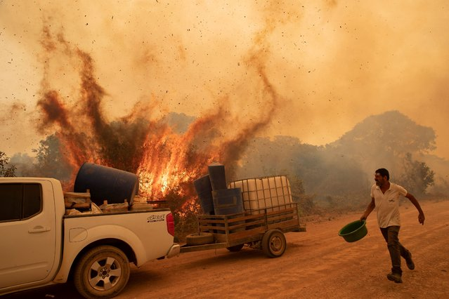 A volunteer tries to douse the fire on the Transpantaneira road in the Pantanal wetlands near Pocone, Mato Grosso state, Brazil, Friday, September 11, 2020. The number of fires in Brazil's Pantanal, the world's biggest tropical wetlands, has more than doubled in the first half of 2020 compared to the same period last year, according to data released by a state institute. (Photo by Andre Penner/AP Photo)