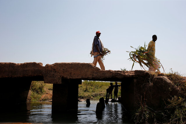 Men holding leaves pass through a bridge on the outskirt of Zaria in Nigeria's northern state of Kaduna November 15, 2016. (Photo by Akintunde Akinleye/Reuters)