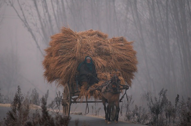 A man rides his horse cart loaded with bundles of dried grass on a cold winter morning in the outskirts of Srinagar December 6, 2016. (Photo by Danish Ismail/Reuters)