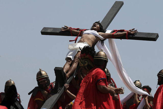 Filipino penitent Ruben Enaje grimaces in pain as he is nailed to a wooden cross for the 29th year, during the re-enactment of the crucifixion of Jesus Christ on Good Friday, in San Pedro Cutud village, San Fernando city, north of Manila, Philippines, 03 April 2015. (Photo by Ritchie B. Tongo/EPA)