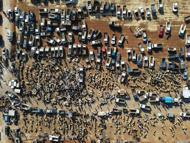An aerial view shows Syrians gathering at a livestock market to sell and buy sacrificial animals on the outskirts of Maaret Misrin town in the northwestern Idlib province on July 16, 2021, ahead of the Eid al-adha (feast of sacrifice). (Photo by Abdulaziz Ketaz/AFP Photo)