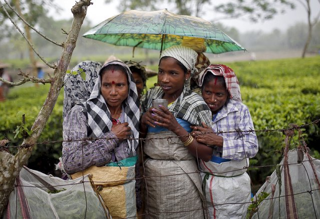 Tea garden workers huddle under an umbrella as they wait for the rain to stop to resume their work inside Aideobarie Tea Estate in Jorhat in Assam, India, April 21, 2015. (Photo by Ahmad Masood/Reuters)
