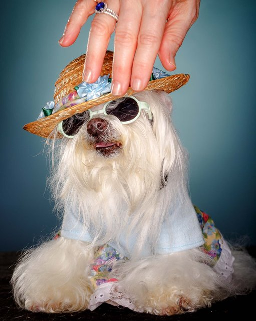 Dolly, 15. (Photo by Thomas Cordy/The Palm Beach Post)
