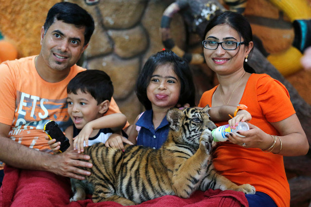 Tourists feed milk to a tiger cub at the Sriracha Tiger Zoo, in Chonburi province, Thailand, June 7, 2016. (Photo by Chaiwat Subprasom/Reuters)