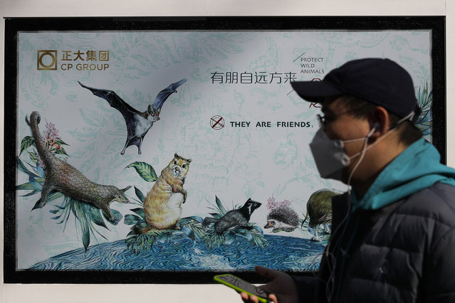 A man wearing a protective face mask walks by a propaganda poster promoting to protect wildlife animals after authorities crackdowns on wild animal markets following the coronavirus outbreak in Beijing, Wednesday, March 11, 2020. For most, the coronavirus causes only mild or moderate symptoms, such as fever and cough. But for a few, especially older adults and people with existing health problems, it can cause more severe illnesses, including pneumonia. (Photo by Andy Wong/AP Photo)