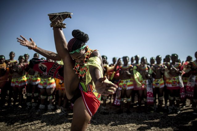 A South African maiden dances as others clap during the Reed Dance ceremony on September 5, 2014 at the eNyokeni Royal Palace in Nongoma in the KwaZulu-Natal region, ahead of the 13th anniversary of the Reed Dance (uMkhosi woMhlanga) celebrated by the Zulu King, Goodwill Zwelithin. (Photo by Marco Longari/AFP Photo)