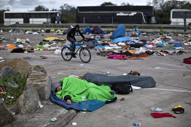 A man sleeps in a parking lot as buses organized by the Austrian government line up in Hegyeshalom, Hungary, Sunday, September 6, 2015. The Austrian authorities have organized a bus service for migrants and refugees reaching the Hungarian border town of Hegyeshalom, with the buses transporting people to the Austrian border with Germany. (Photo by Marko Drobnjakovic/AP Photo)