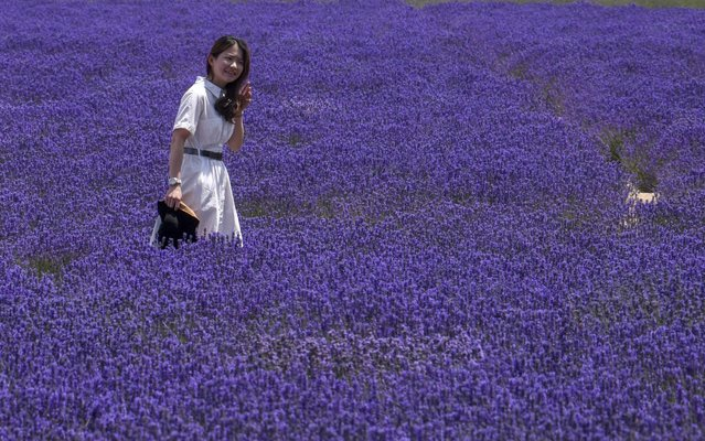 A woman visits a lavender field in Huocheng County, northwest China's Xinjiang Uygur Autonomous Region, June 16, 2020. WIth a cultivated area of 56,000 mu (about 3,733 hectares), the lavender industry of Huocheng County has created more than 15,000 jobs in 2019, with a yearly output value of about 1.5 billion yuan (about 212 million U.S. dollars). (Photo by Xinhua News Agency/Rex Features/Shutterstock)