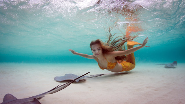 Margaux Maes, 19 swims with stingrays in full Mermaid costume. Maes, 19, donned a brightly coloured mermaid tail as she dived into the crystal clear water to splash around with the rays at sunset. The snaps were taken off the coast of the Cayman Islands on May 16, 2016. (Photo by Ellen Cuylaerts/Caters News Agency)