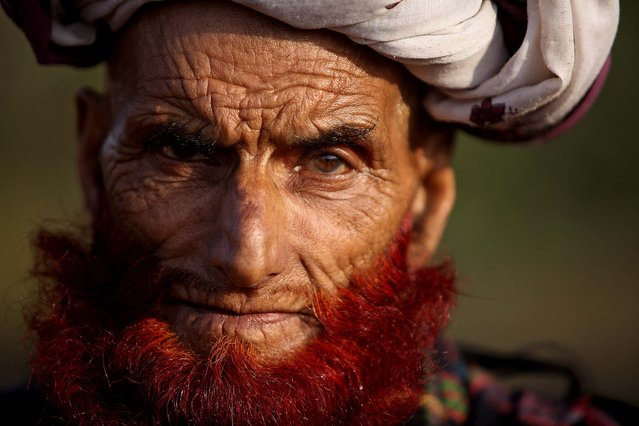 A nomadic Gujjar man is a member of the tribe moving out from the hills to escape the cold winter, November 17, 2012. (Photo by Channi Anand/Associated Press)