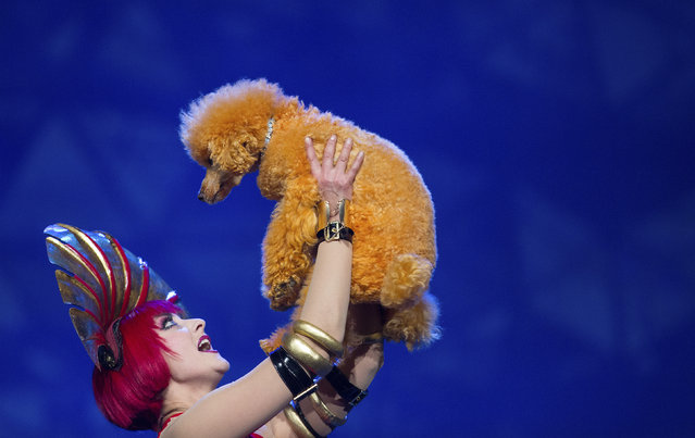A dancer holds up a poodle during a dress rehearsal. (Photo by Hannibal Hanschke/Reuters)