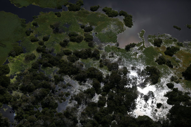 The Mamiraua Sustainable Development Reserve is seen in Uarini, Amazonas state, Brazil, May 16, 2016. (Photo by Bruno Kelly/Reuters)