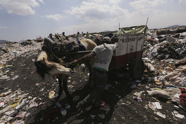 A garbage collector, with his horse and cart, prepares to unload rubbish at the municipal dump in Nezahualcoyotl, on the outskirts of Mexico City, February 18, 2015. (Photo by Henry Romero/Reuters)