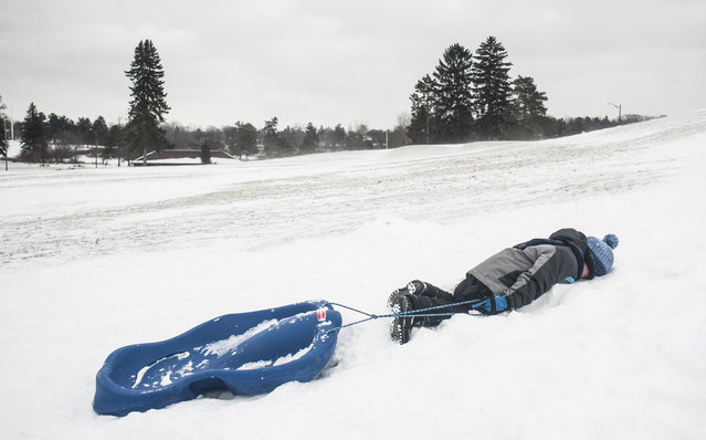 Daniel Hendrickson, 5, falls into the snow from exhaustion while climbing a hill at Cascade Falls Park in Jackson, Mich. Tuesday, January 12, 2016. (Photo by Jessica Christian/Jackson Citizen Patriot via AP Photo)
