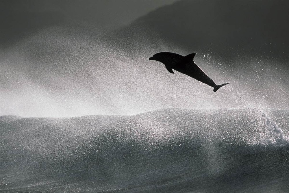 Dance of the Dolphins