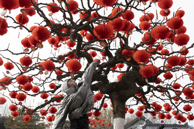 A child jumps to touch lanterns hung on a tree ahead of the Chinese Lunar New Year celebrations in Beijing on Thursday, January 16, 2020. The world's largest annual migration begins this week in China with millions of Chinese traveling to their hometowns to celebrate the Lunar New Year on Jan. 25 this year which marks the Year of the Rat on the Chinese zodiac. (Photo by Ng Han Guan/AP Photo)
