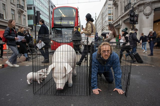"""Jerome Flynn, who played Bronn on """"Game of Thrones"""", posed in a cage on London's Oxford Street on November 26, 2019 alongside the campaign group Farms Not Factories to raise awareness that most supermarkets and high street food chains are still sourcing their pork almost entirely from factory farms. Says Jerome """"Factory Farming is one of the most horrific examples of how far we have strayed from our hearts in the relentless drive for profit and so called progress"""". (Photo by Jeff Moore/Splash News and Pictures)"""