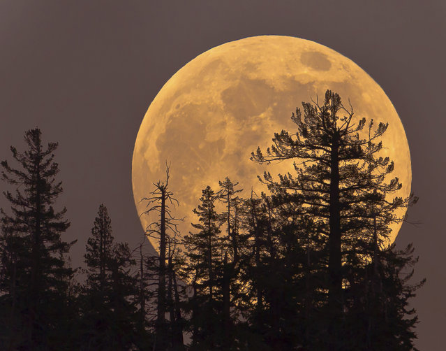 Supermoon Rising. (Photo by Getty Images/iStockphoto)